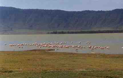 Flamingos in the crater